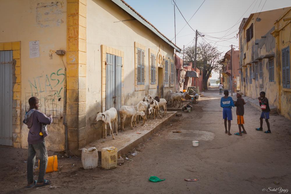 Saint-Louis - Sénégal (3 sur 10)