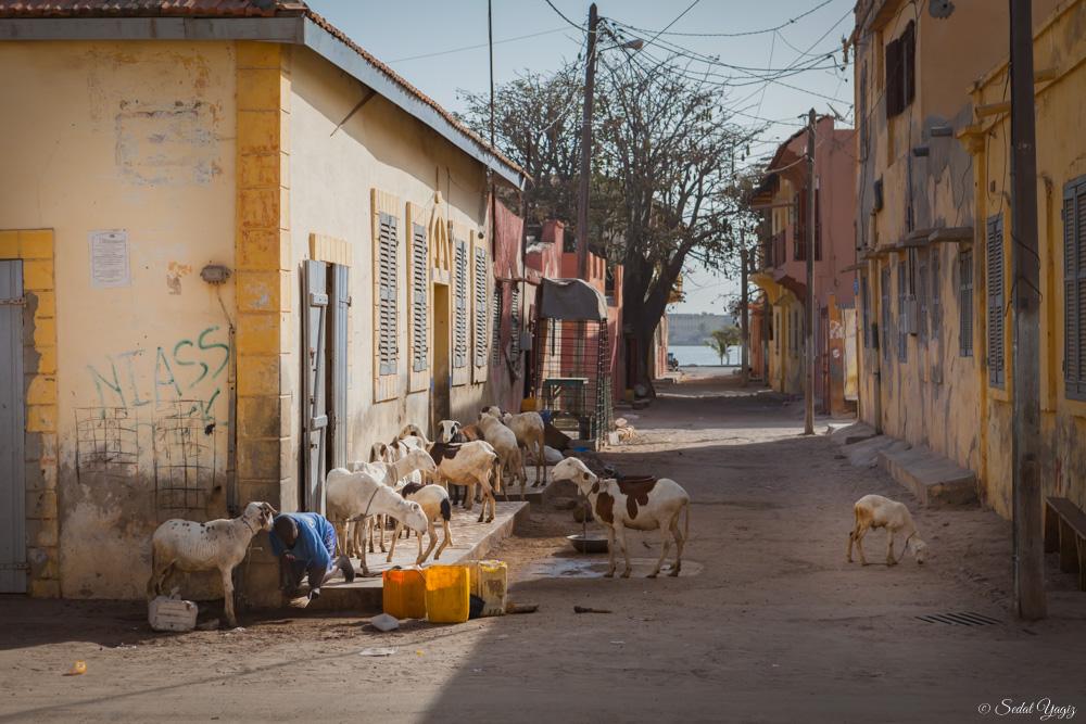 Saint-Louis - Sénégal (7 sur 10)