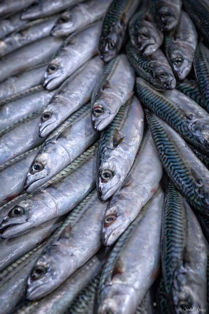 pêcherie-figuerolles - Montpellier (7 sur 10)