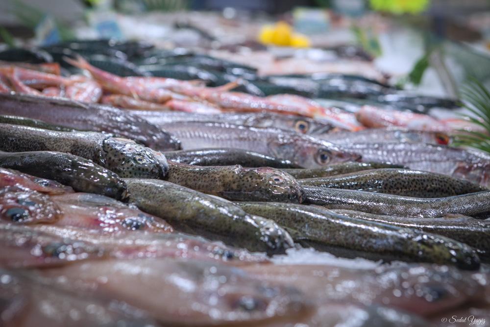 pêcherie-figuerolles - Montpellier (8 sur 10)